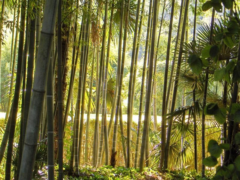 Bambouseraie en cevennes bnb chambres dhotes hotels