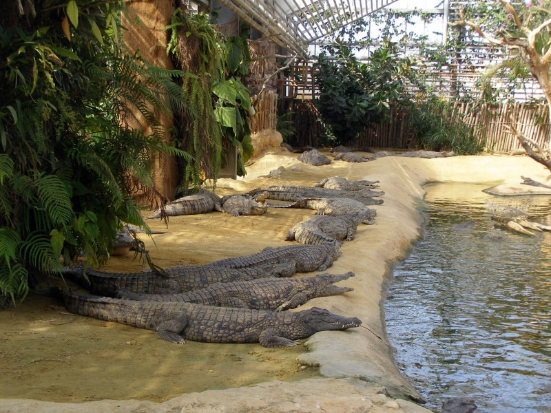 ferme aux crocodiles bnb chambres dhotes hotels