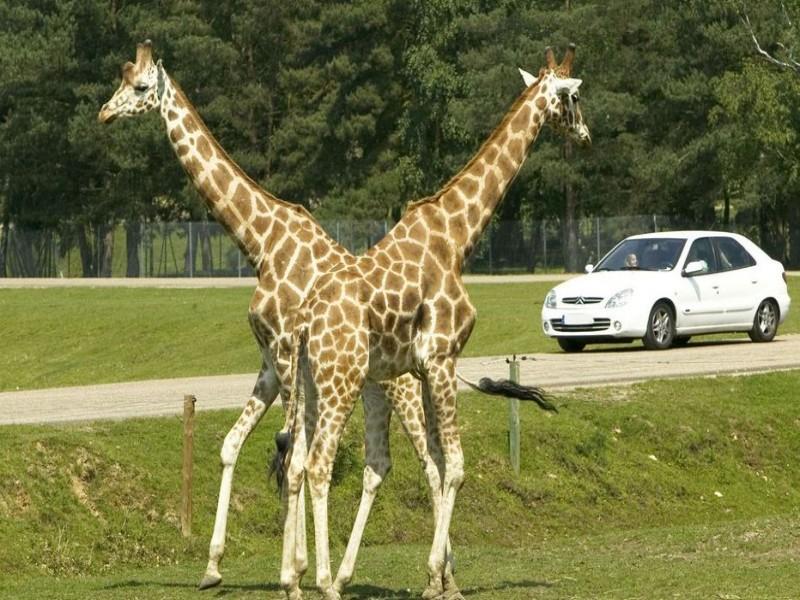 ZooSafari de Thoiry bnb chambres dhotes hotels