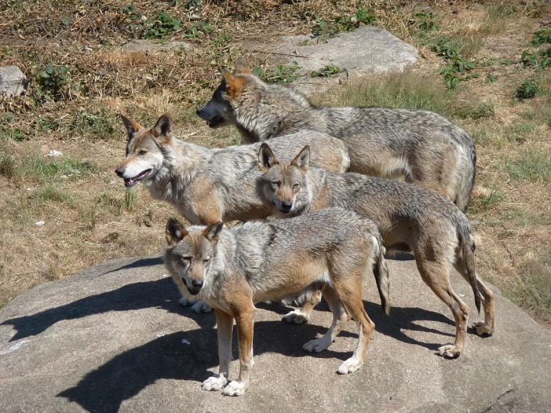 Parc animalier des monts de Guéret